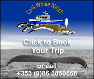 Book your West Cork Whale Watching Adventure