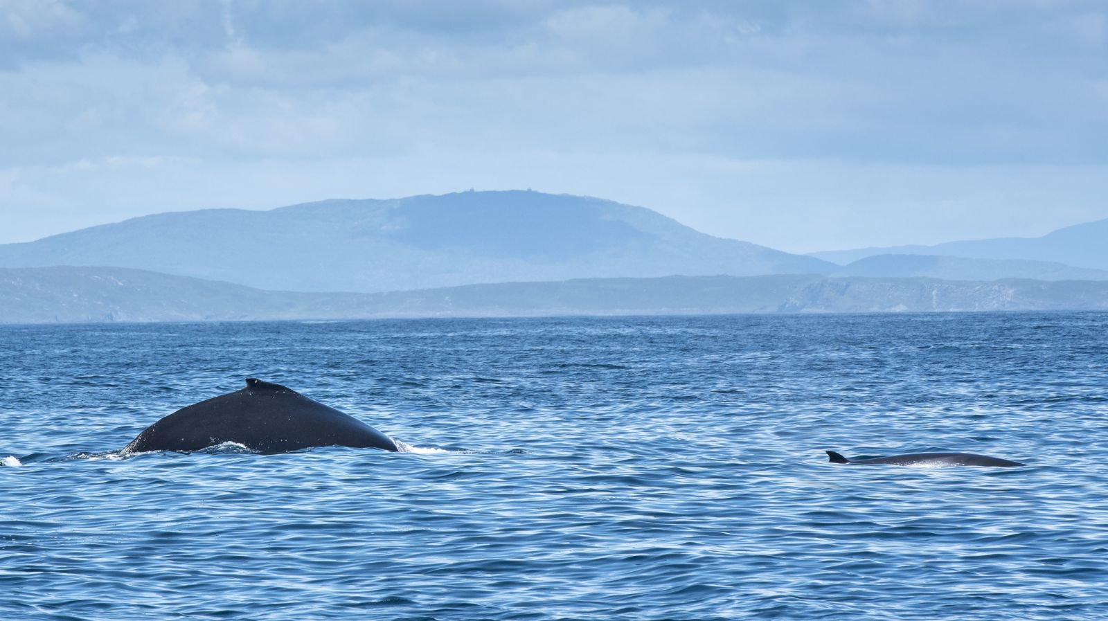 Cork Whale Watch Photo Gallery — Whale watching in West Cork